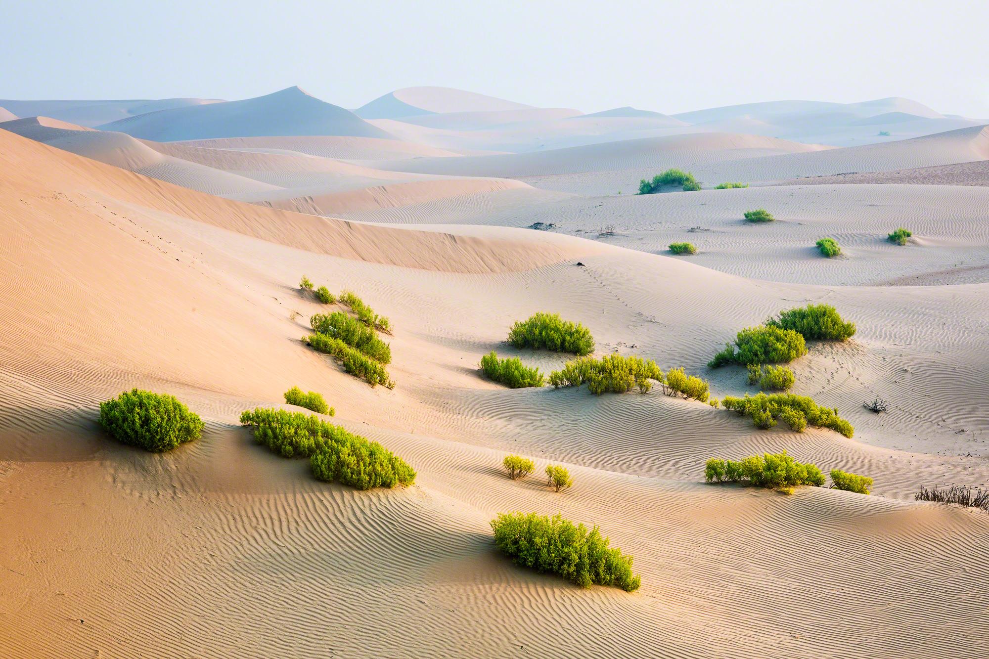 The Abu Dhabi Desert Nicolesy
