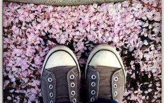 Cherry Blossom Rain