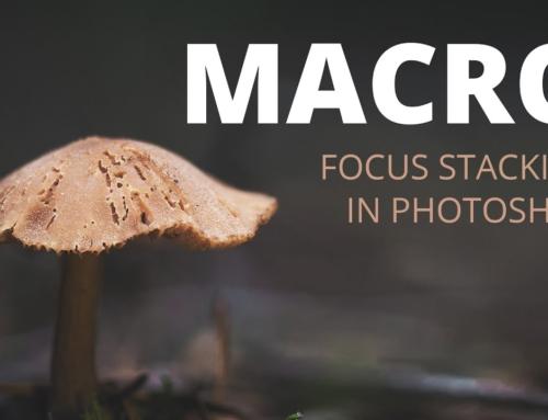 Macro Focus Stacking in Photoshop